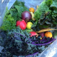An example of Summerland's weekly bounty , including apples, onions, kale, carrots and more.