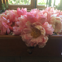 LA in Bloom | Peonies