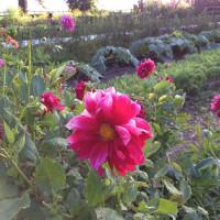 LA in Bloom | The Garden at Esalen, Big Sur