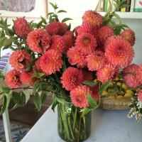 LA in Bloom | Dahlias